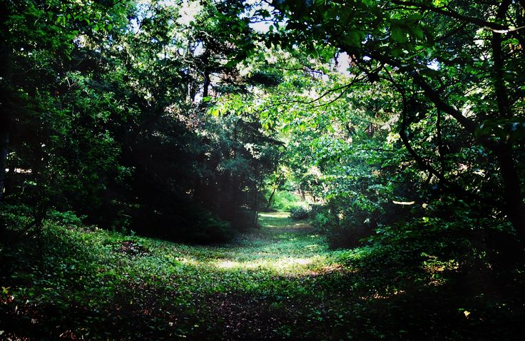 Forest path Photo: Beata Bauer