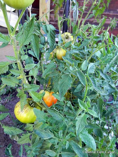 Gardening in bags: Gardens Ideas, Ems Saco, Growing Ideas