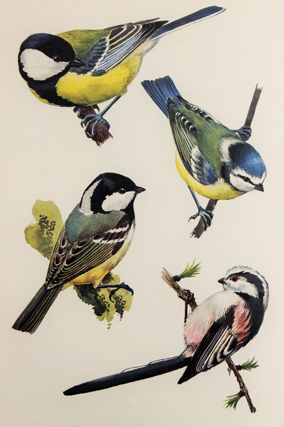 Charles Tunnicliffe 1940s Original Vintage Colour by PaperPopinjay