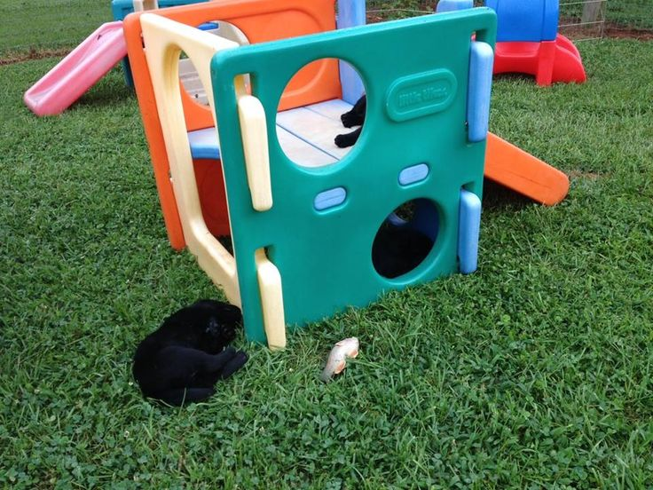 112 Best Images About Animals Dog Kennels And Enclosures