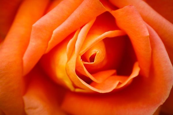 The Wonderful World of Macro Lenses: Close-Up Photography Lesson #4