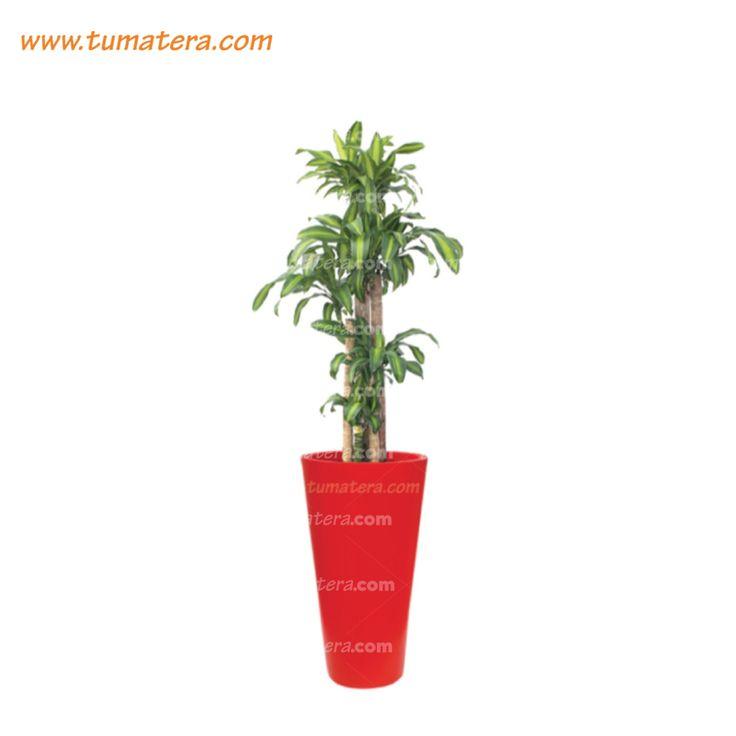 Encuéntralas en: https://www.tumatera.co/products/combo-mp-3461l-con-palo-de-brasil/