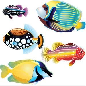 Google Image Result for http://epsvectorart.com/ocs-images/4788/marine-fish-vectors.jpg