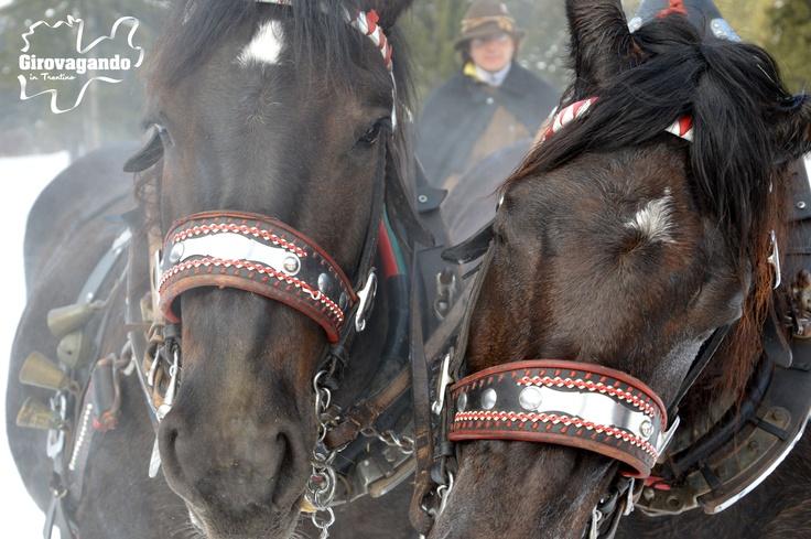 La rigida temperatura esterna fa' si che d'inverno i cavalli siano sono sempre circondati da una fitta condensa