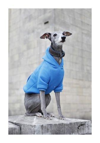 Bluza dla psa niebieska
