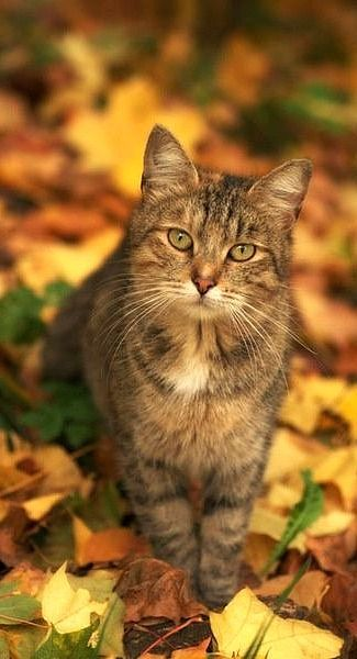 Autumn glory and this pretty little cat with its own autumn colors, only enhances the scene.