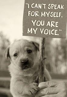 I am writing an essay on animal cruelty..? I NEED HELP!?