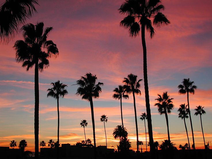 California wallpaper full hd sdeerwallpaper palmeiras