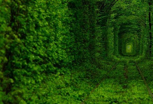 Tunnel of love, #Kleven #ukraine