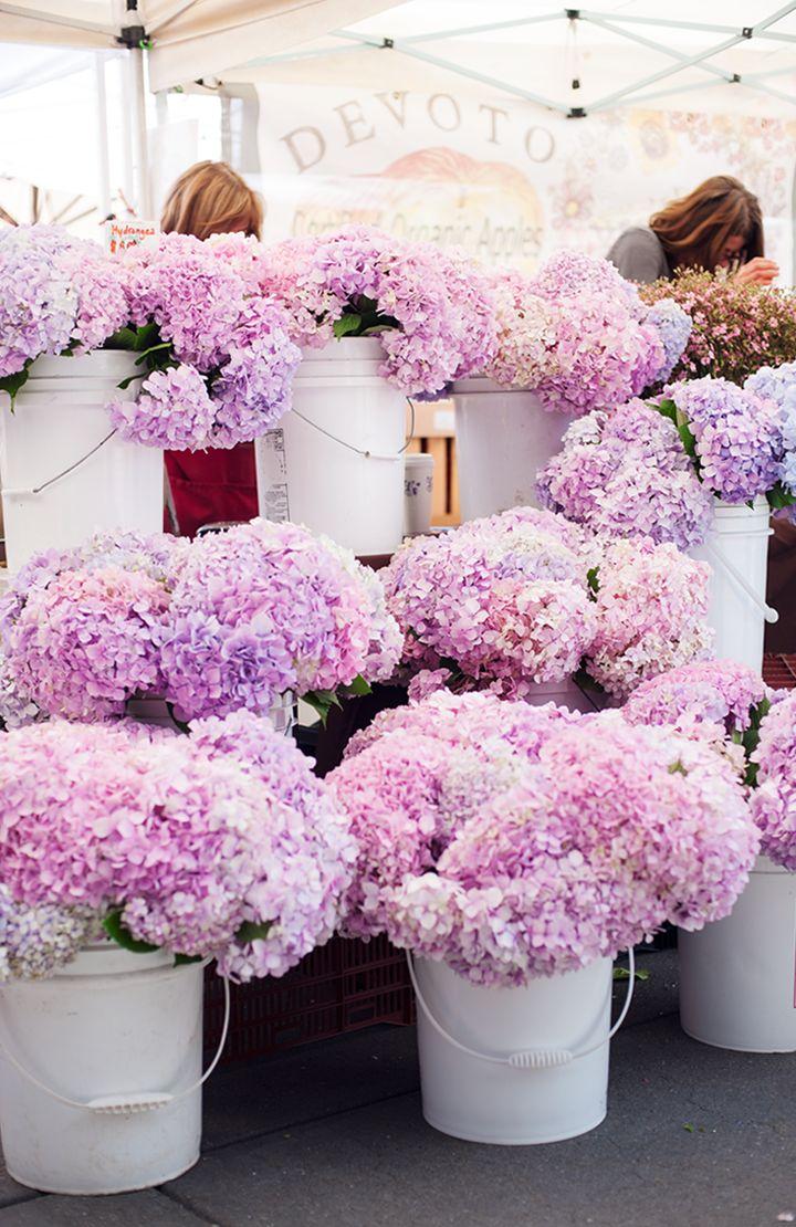 Hydrangeas at the farmer's market
