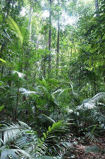 Taman Negara Jungle