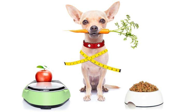 dogs, φαγητά, κατοικίδια, σκυλιά, φαγητά για σκυλιά