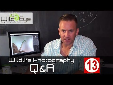 Wildlife Photography Q&A: Episode 13 - The Lightroom Episode