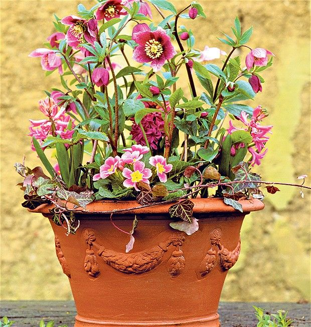 12 best Ideas For Winter Containers And Window Boxes images on