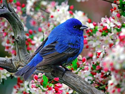 Imagini Natura Primavara - Flori si Pasari - ~ Peisaje de Iarna