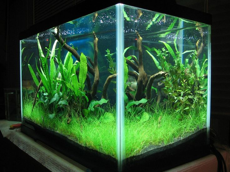 23 best images about 10 gallon aquarium on pinterest for Fish for a 10 gallon tank