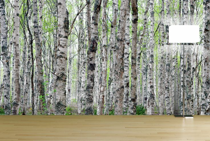 Birch tree forest wall mural forest tree wall murals for Birch tree forest wall mural