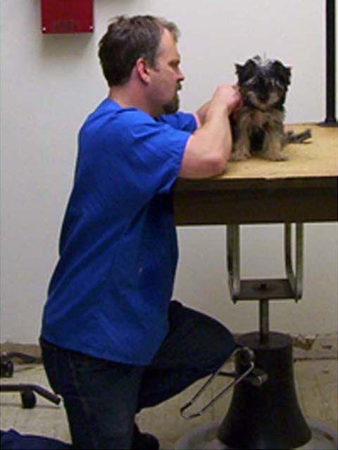 dog grooming in Broken Arrow OK