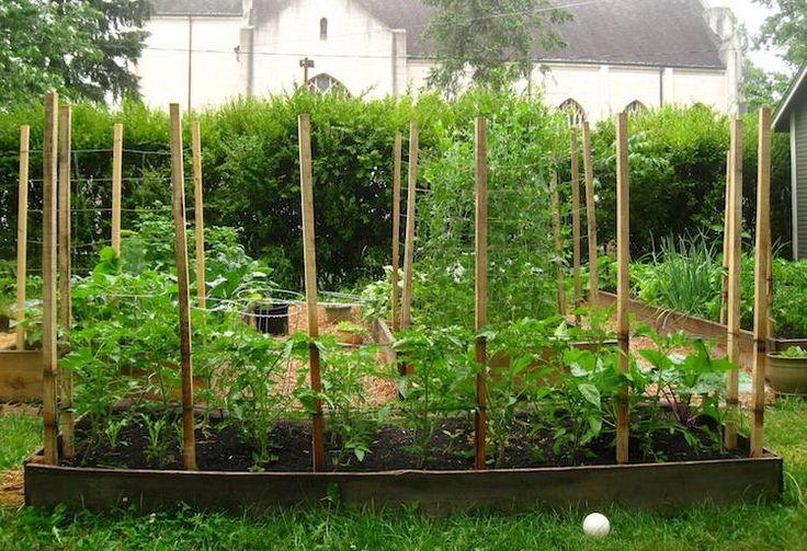 Best 25 Tuteur Tomate Ideas On Pinterest Tuteur Jardin Permaculture And Jalonnement Des