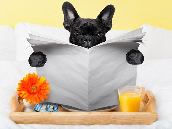 Love this! Top 5 Pet-Friendly Hotel Chains | petMD