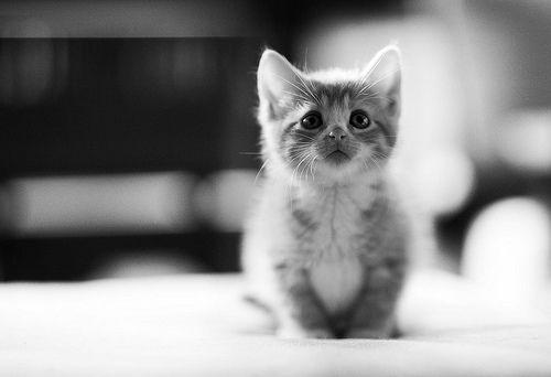 sweet baby #pets #kitten #blackandwhite #photography