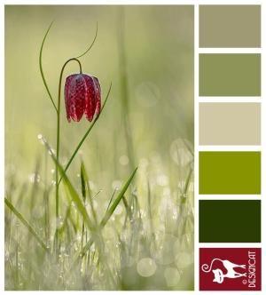 Solo - Green, Fern, Kaki, Leaf, Burgundy, Red - Designcat Colour Inspiration Board by Hercio Dias