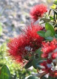 national flower ??
