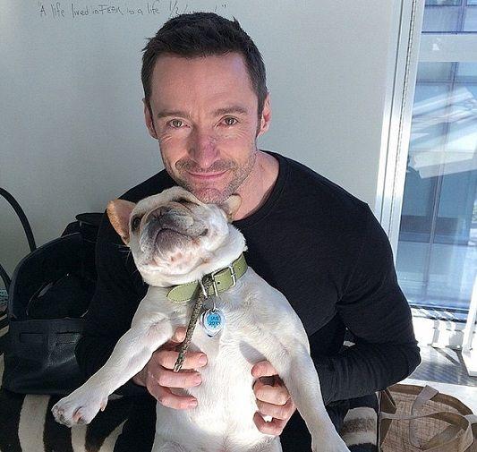 Hugh Jackman's Frenchie, French Bulldog