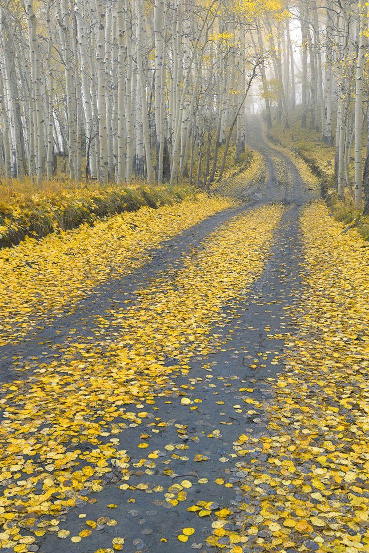 Last Dollar Road, Uncompahgre National Forest near Telluride, Colorado   Igor Menaker