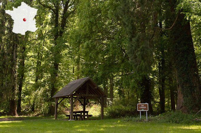 les naturalistes en forêt de Tronçais (Allier)