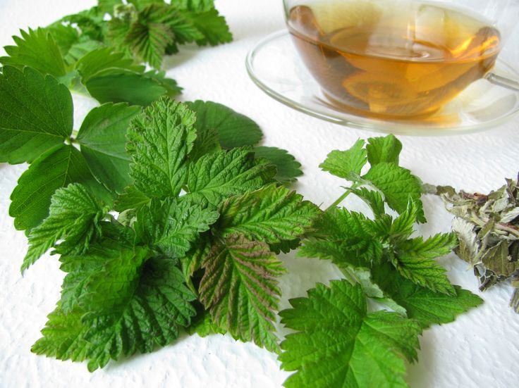 Raspberry plants have many uses. For instance, the leaves are often used to make an herbal raspberry leaf tea. Both the fruit and leaves of red raspberry have several herbal uses that date back centuries. Find out how to harvest raspberry leaf for tea in this article.