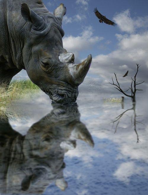 Rhino!                                                                                                                                                     More
