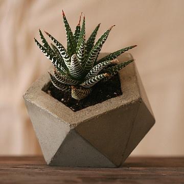 Concrete Planter Natural Gray