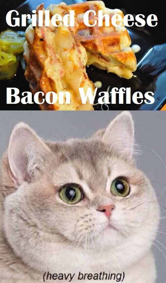 Grilled Cheese Bacon Waffles #Cats #Funny #Meme