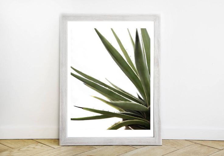 Reach for the Stars - Aloe Vertical Color Photograph - Southern California Modern Fine Art Print - Original Southwestern Cactus Picture by ShopRachaels on Etsy https://www.etsy.com/listing/556819785/reach-for-the-stars-aloe-vertical-color