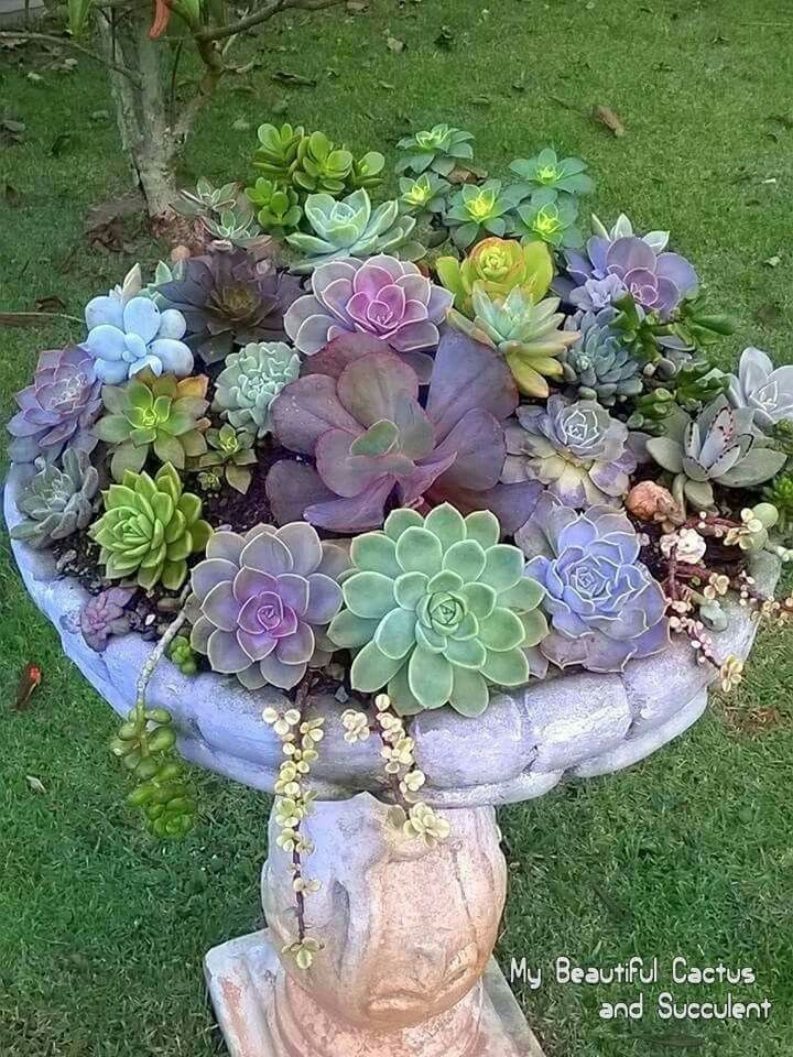 Another succulent arrangement in a birdbath.