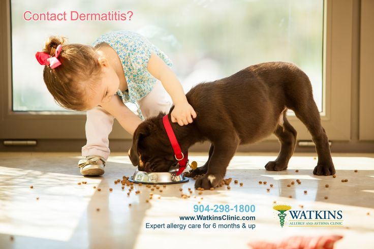 Personal Care Product and Makeup Allergies Best dogs for