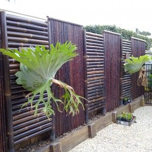 http://papiermaine.com/bamboo-fencing-ideas/modern-black-bamboo-fencing-design-black-bamboo-fence-design-ideas-for-your-inspiration-backyard-indian-cane-fencing-for-private-garden-bamboo-screen-fence-installing-bamboo-fencing/