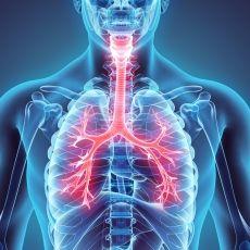 ¿QUE ES EL TRÁQUEA? ¿CREES USTED QUE ES NECESARIO PARA SU RESPIRACIÓN? CIGB le ayuda a documentarse La tráquea es una parte muy importante del aparato respiratorio, es el tubo que conecta la nariz y la boca con los bronquios y los pulmones. Su papel es el de ofrecer una vía abierta al exterior desde los pulmones. Debido a este papel fundamental en la respiración, cualquier daño en la tráquea es potencialmente muy peligroso para la vida