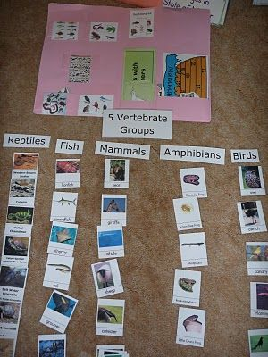 sorting between vertebrates and invertebrates and sorting between the five vertebrate groups--for the latter, I'll have the kids cut their own photos from back issues of National Geographic