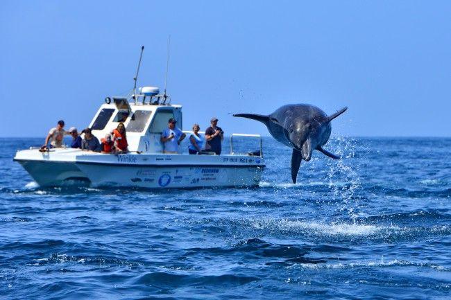 Raggy Charters - Boat trips in Port Elizabeth, South Africa