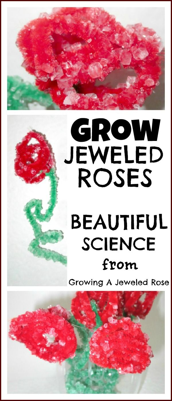 Growing roses science experiment with pipe cleaners and borax.