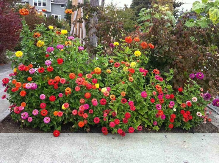 Garden Flower Bed Design Ideas Home Color Plant Tree Excellent