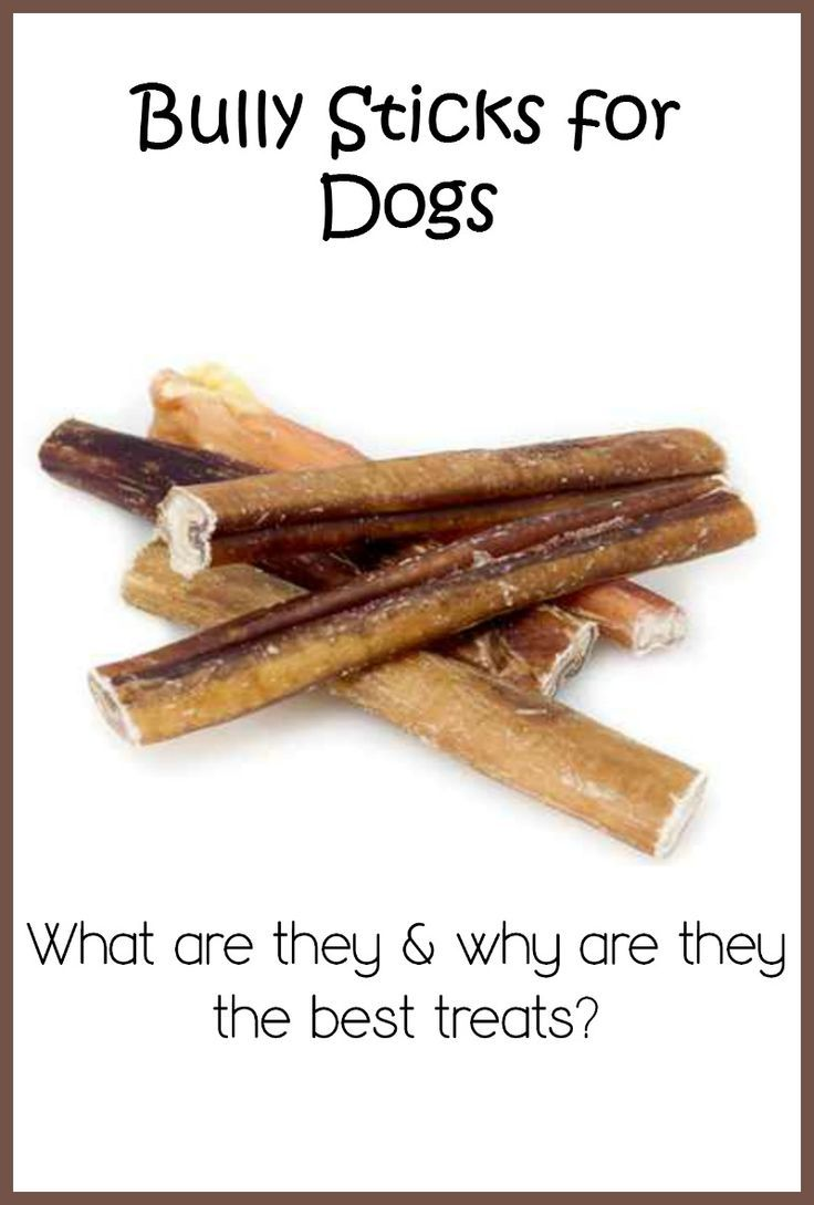 Bully Sticks: Why are they one of the best treats for your dog?