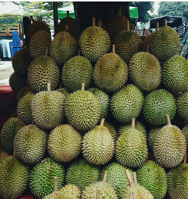 Durian is the king of fruit! But it's super smelly and me no like it.