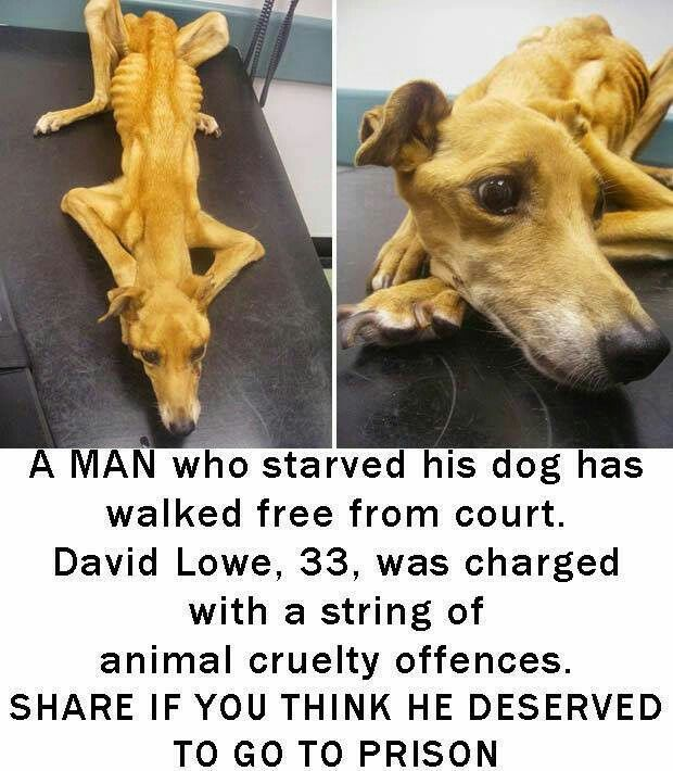 Why Animal Rights?