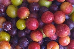 Plum varieties and tips