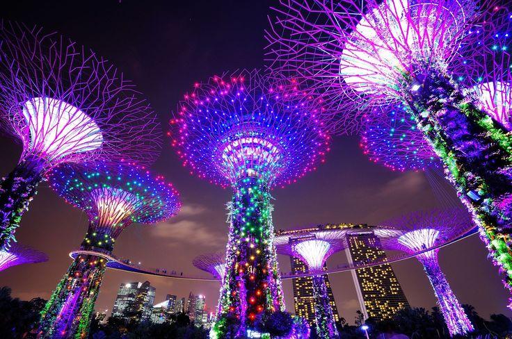 シンガポールにある『ガーデンズ・バイ・ザ・ベイ』。マリーナベイにオープンした広大な植物園です。