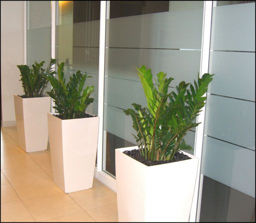 Top 25 ideas about interior lanscapes on pinterest planters hanging planters and restaurant - Indoor desk plants ...