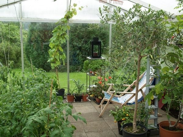 2017-06-05: The greenhouse.